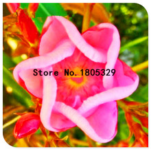 Big Promtion 100 Nerium Seeds Oleander Potted Planting Seasons Flower Plants Easy Growing China Seeds Balcony Garden Decoration