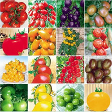 100pcs 24 KINDS Tomoto Seeds mixed packed Purple Black Red Yellow Green Cherry Peach Pear Tomato Seed Organic Food for Garden(China)