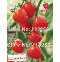 100 *high-yielding Tomatoberry Garden (f1) Tomato Seeds Fruit Vegetables Seeds