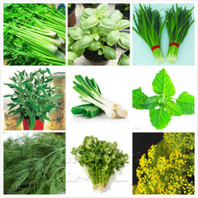 9 Culinary Herb Seeds (2300 seeds)---Cooking Herbs-Parsley Onion Celery Basil Dill Leek Sage Cumin