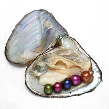 Wholesale 9-10mm vacuum-packed Oyster Wish Freshwater Pearl Dyed Beads Round Pearls Mussel Shell with Pearl Inside Wedding Gift
