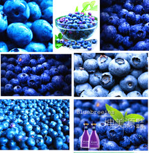 2017 Direct Selling Sale Happy Farm Outdoor Plants Courtyard Plants 200 Pcs Blueberry Seed Fruit Seeds Potted Free Shipping