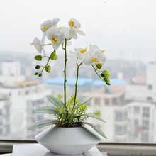 100 PCS Potted Plants Phalaenopsis Orchid Flower Seeds Rare White Butterfly Seeds