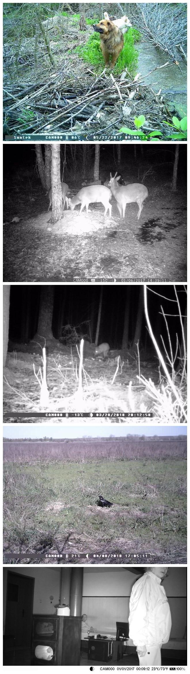 Suntek hunting camera
