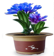 30 Pcs blue color Beautiful Chinese clivia seeds plants bonsai garden flower seed semente decorative flowers rare