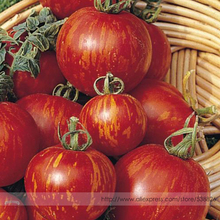 Tigerella Tomato Seeds, Professional Pack, 100 Seeds / Pack, High Yields Even in Cooler Weather Good Greenhouse Crop #TS020