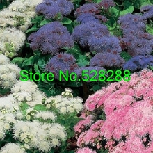50+seeds/packageratum Rare Hawaii Mix Flower Seeds Garden Decoration Bonsai