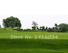 Lawn Turf Seed 500pcs Grass Seeds Fresh Green Soft Runner Turfgrass for home park soccer golf place free shipping