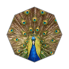 Animal Beautiful Peacock Custom Portable Folding Travel Design Rain and Sun Beach Umbrellas Hat Unique Parasol Umbrella(China)