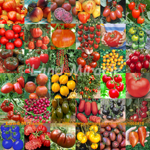 36 Types Mix Tomato Seeding Seeds, 100 Seeds, Fresh Organic Fruits Vegetable Seeds Bonsai For Garden Planting-Land Miracle