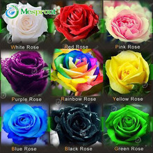 100PCS Flower Seed Holland Rose Seed Lover Gift Orange Green Rainbow RARE 24 Color To Choose DIY Home Gardening Flower(China)
