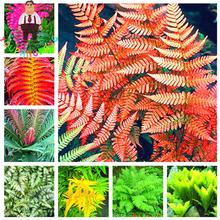 100pcs Garden Fern Seeds Rare Creeper Vines Grass Seed Mixed Rainbow Foliage Plants For Bonsai Plant 2017 New Sementes Sale .