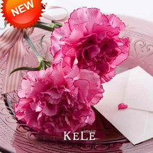Big Promotion!200 Seeds/bag Light Red Edge Carnation Seeds Potted Courtyard Garden Plants Dianthus Caryophyllus Flower Seeds,#IF(China)