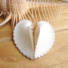 Clam shells concentric type sea shells natural conch shells crafts beach wedding decoration nautical home decor