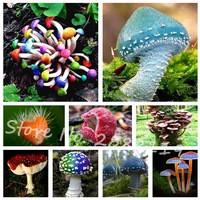 120pcs-bag-Colorful-Mushroom-Seeds-Funny-Succlent-Plant-Edible-Health-Vegetable-Mushroom-Seeds-For-Home-Garden.jpg_200x200