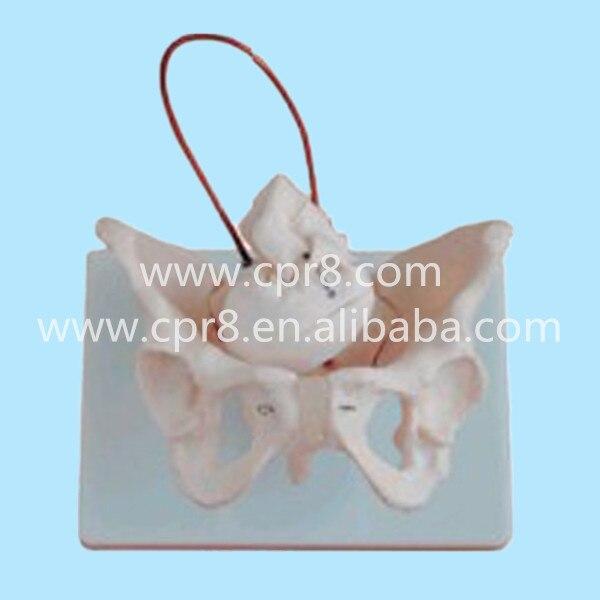 BIX-A1026 Female Pelvis Model With Fetal Skull Midwifery Bone Model  MQ166<br>