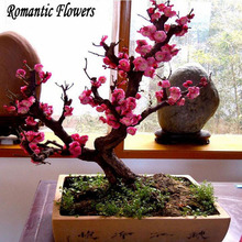 10 Pcs Seeds Prunus Mune Bonsai , Pink Prunus Bonsai Seeds, Tree Seeds, Potted Balcony, DIY Planting