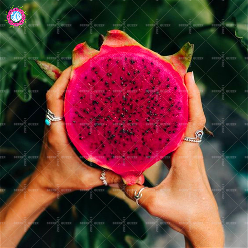HTB1qRNozFuWBuNjSszbq6AS7FXan - 100pcs Dragon fruit Seeds Dwarf Fruit Trees Bonsai