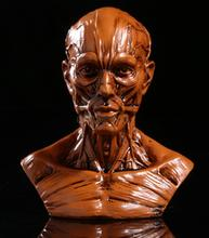 Resin Human Model Anatomy Skull Head Muscle Drawing School Figurine Brown