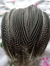 wholesale 10pcs high quality beatiful natural guinea fowl feather 12-17cm / 5-7inch Decorative diy