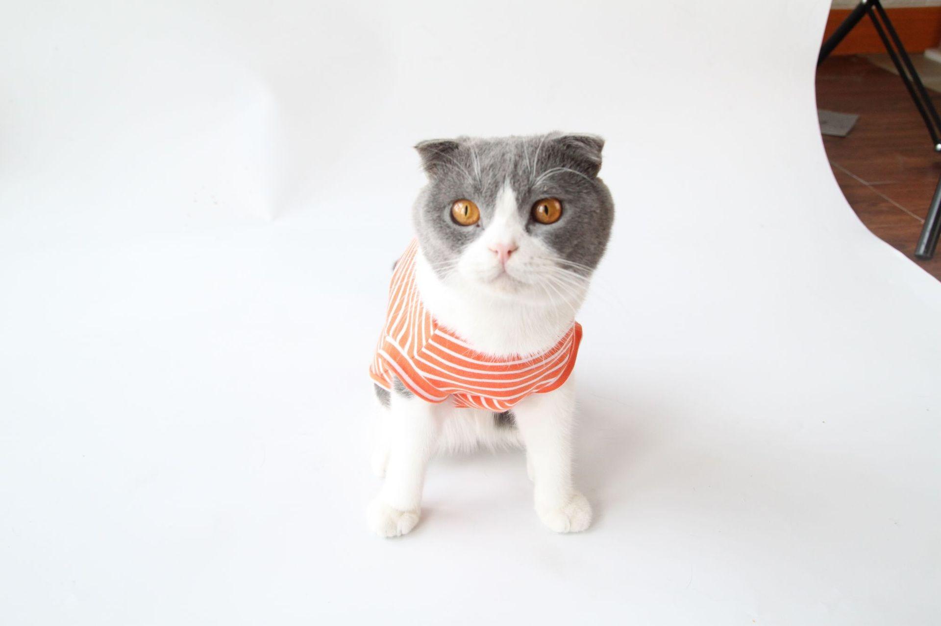Algodón Gato Mascota Ropa Suave Moda SpringAutumn Compre Nueva Traje n0wP8OkX