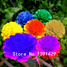 new arrival 100 pcs rare real Rainbow Chrysanthemum Flower Seeds, mixed color ,DIY Garden supplies, Bonsai potted plant,