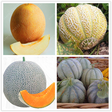20pcs/bag Cantaloupe seeds ,Different kinds Honey melon Organic fruit seeds Extra-big Extra-sweet perennial HaMi melon plant pot(China)