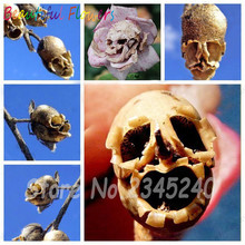 Free Shipping The Death Rose seeds rare and mysterious plant species of snapdragon flower seed pods skull 100 PCS