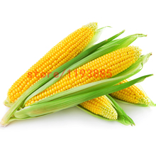 20pcs corn seeds yellow fruit corn seeds vegetable Plant Variety Fresh sweet bonsai plant for home garden(China)