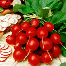 Cherry Radish 100 Seeds Organically Vegetable seeds round smooth red cherry radish Bonsai potted fruits vegetables seeds(China)