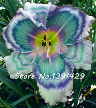 New!!! 50 Pcs Holland Rainbow Daylily Seeds Rare Day Lily Flower Plant Garden Exotic Plant Organic Vegetable Seeds Can Eat