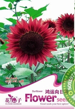 Free shipping,5 professional pack(15 pieces seed per pack)/Fortune sunflower seeds/ornamental potted flowers/ novice planted