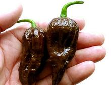 50 Seeds / Pack, Chocolate Naga Jolokia Chilli Seeds, Ghost Pepper(China)
