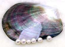 SALE GENUINE Big 8-9CM Gray Natural CLAM Oyster hand burnish Shell Smooth-pen32 Wholesale/retail Free shipping