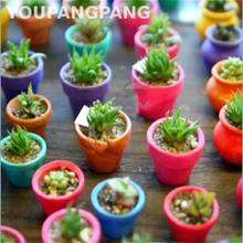 100 Pcs Mixed Mini Cactus Seeds Multifarious Ornamental Plants Bonsai Seed For Home Garden Decoration Diy Plant Sementes Sale