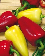 200 seeds/bag Rare Seeds Sweet Pepper chili seeds Viktoriya Russian Organic Heirloom Vegetable Seeds plant for home gardden(China)
