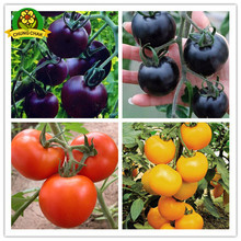 Mix Colors High Quality Tomato Seeds 400pcs Garden Home Fruit Vegetable Seed Purple Blue Farming Free Shipping Very Easy Plants(China)