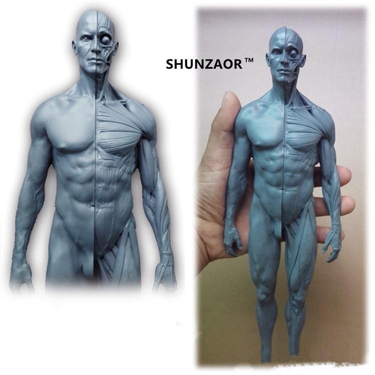 SHUNZAOR 30cm human skeleton anatomical model Anatomy Skull Head Muscle Bone Medical Artist<br>
