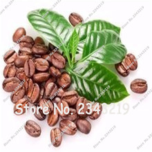 Coffee Bean Seeds Tropical Bonsai Tree Seeds Perennial Green Vegetable Fruit Coffee Tree Seeds for Home garden 10 seeds/bag