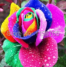 100 PCS 15kinds Beautiful Flower seeds Rainbow rose seed Black Rose Seeds of roses seedlings climbing rose plant