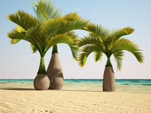 10 Pcs/bag Bottle palm tree Seeds Exotic Plants Bonsai tree Tropical Ornamental flower evergreen plant pot for home garden