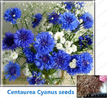 100pcs/bag Cornflower (Centaurea Cyanus) Seeds Blue Centaurea cyanus Flower Seeds for Home Garden Plants  EXCELLENT CUT FLOWER