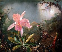 Cattleya Orchid and Three Hummingbirds, 1871 by Martin Johnson Heade Painting Reproductions Famous Art Flower Painting