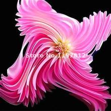 100 Pcs/lot New Type Dahlia Seeds For Indoor Plants Bonsai Flower Seeds Perennial Winter Flowers Ornamental Plant Free Shipping