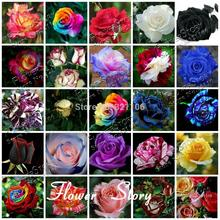 25 kinds of roses 500 seeds DIY home gardening, garden decoration, flowering color more, it is pleasing to the eye(China)