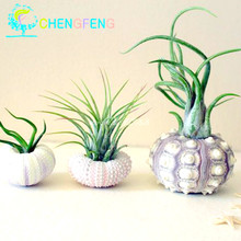 2016 Free Shipping 100pcs Spring Grass Seeds Succulents Plant New Grass Seed Diy Bonsai Potted Gift Garden Home Exotic Plants