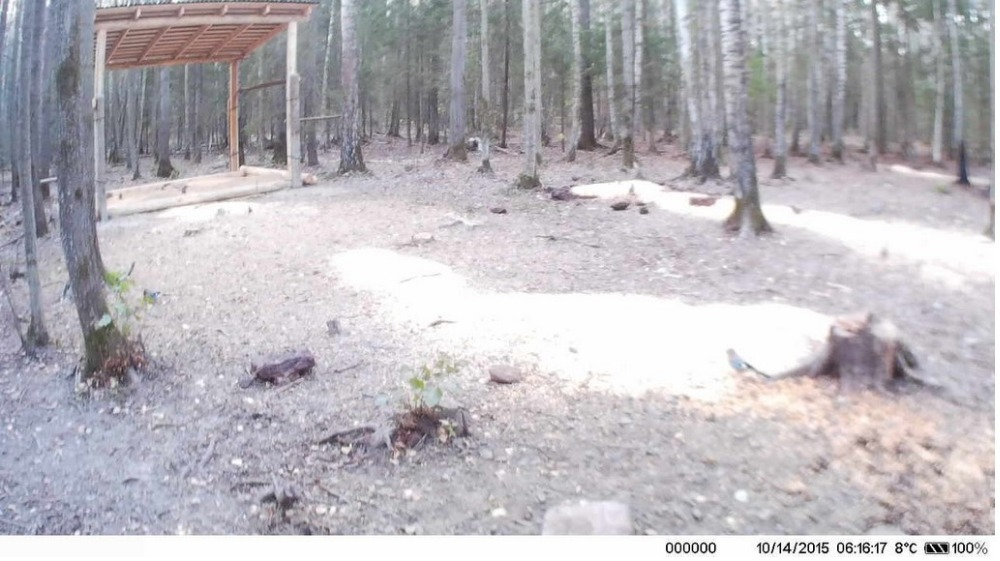 HC550A Photo Trap Night Vision Wireless Hunting Camera 16MP Scouting Trail Camera HC-550A