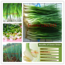 300 chinese green onion seeds rare vegetable seeds for home planting Cooking spices