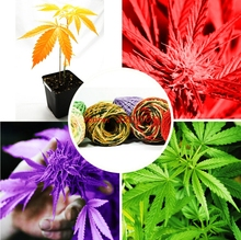 2017 Sale Fresh hemp seeds bonsai seed flower vegetable seeds For home garden plants, Can produce colored twine 100 pcs / bag