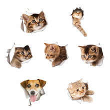 3D Cats Wall Sticker Toilet Stickers Hole View Vivid Dogs Bathroom Room Decoration Animal Vinyl Decals Art Sticker Wall Poster(China)